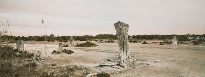 Nici Cumpston, Tree Stumps, Nookamka, South Australia, 2008, archival inkjet print on canvas, hand-coloured with watercolours and pencils. Courtesy the artist and Michael Reid Gallery