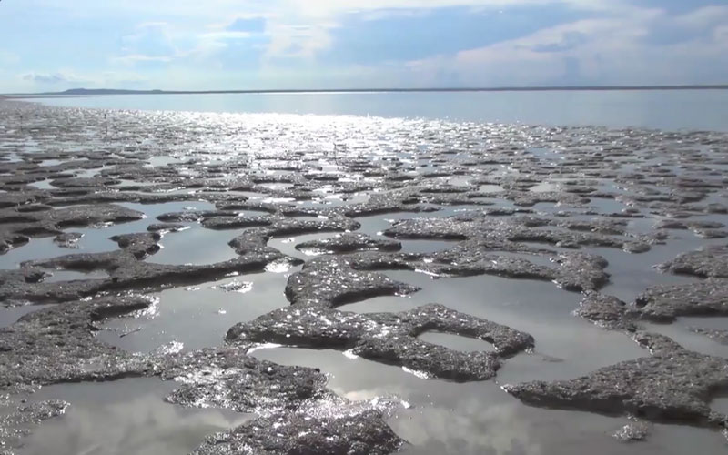 Mud flats at Yathikpa, still from Let's Care for Country (Dir. Marcus Barber and Djambawa Marawili). Courtesy The Mulka Project