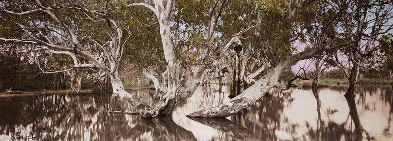 Nici Cumpston, Flooded Gum, Katarapko Creek, Murray River National Park 2007, archival inkjet print on canvas, hand-coloured with watercolours and pencils. Courtesy the artist