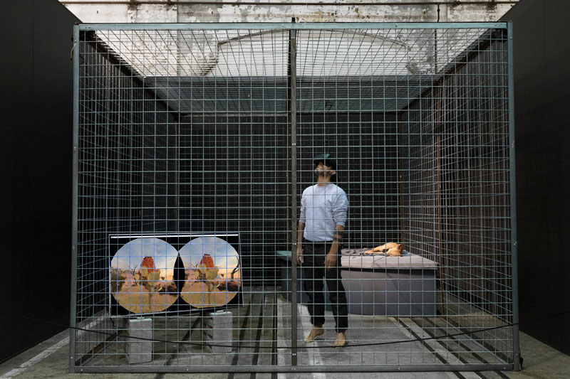 Hayden Fowler, Together Again, installation and live performance, Sydney Contemporary 2017: cage, Australian dingo, virtual reality landscape. VR designer: Andrew Yip, UNSW Art & Design. Photo: Joy Lai
