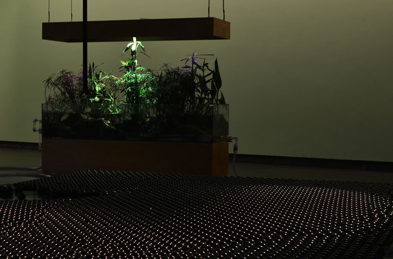Tega Brain, Deep Swamp, 2018, glass tanks, wetland plants, gravel, sand, acrylic pipes, shade balls, electronics, misters, lighting, pumps, custom software, 3-channel sound. Image: courtesy of the artist and the Guangdong Museum of Art
