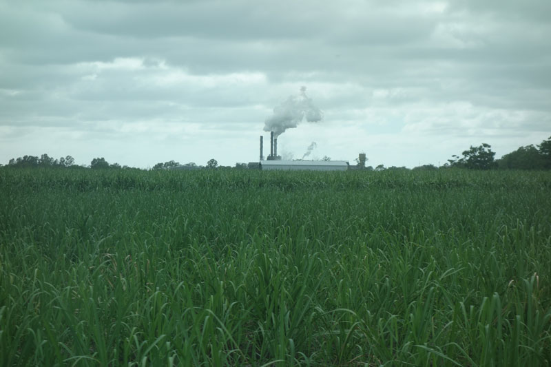 View from Simon Mattson's farm: Sugar cane field and power station