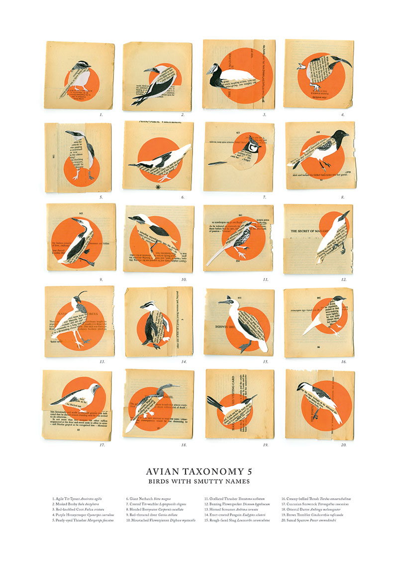 Zoe Sadokierski and Kate Sweetapple Avian Taxonomy 5: Birds with Smutty Names