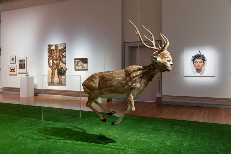 Installation image, My Monster: The Human–Animal Hybrid, installation view, RMIT Gallery. Photo: Mark Ashkanasy