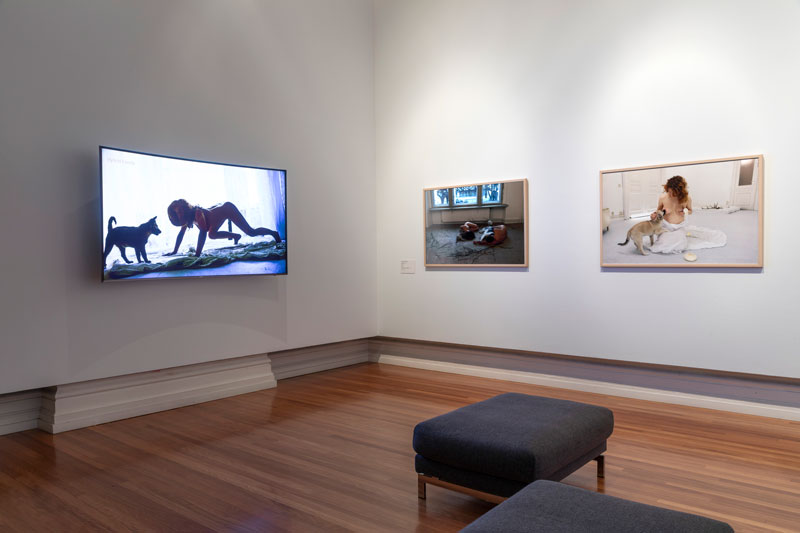 Maja Smrekar, K-9_topology: Hybrid Family, 2016, installation view, RMIT Gallery. Photo: Mark Ashkanasy